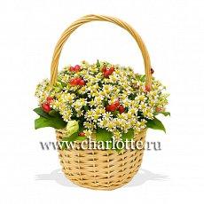 zakaz-i-dostavka-tsvetov-v-sankt-peterburge